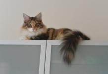Katzen 22