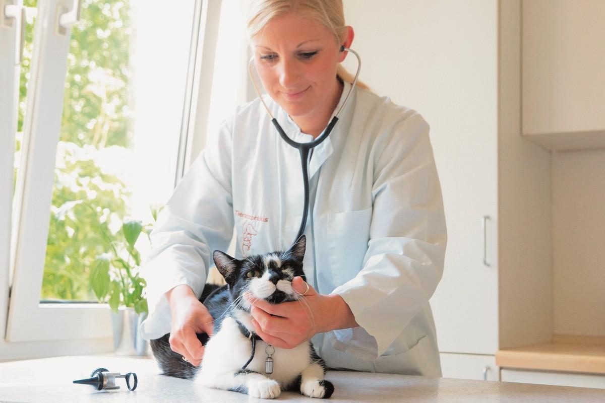 tierarztpraxis-sandra-meyer_leistungen_katze_gesundheitsvorsorge